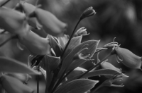 Fairchild Garden | Moved by the Wind