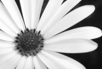 Fairchild Garden | Daisies