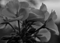 Fairchild Garden | LampPost